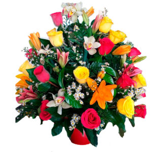 Flores santa marta