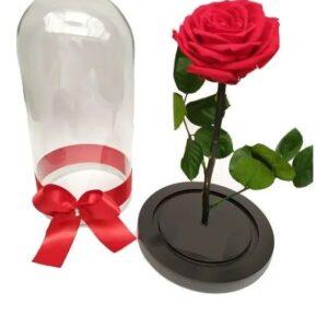 Rosas preservadas en santa marta